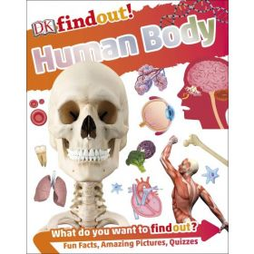 Human Body: DKfindout! (Paperback)