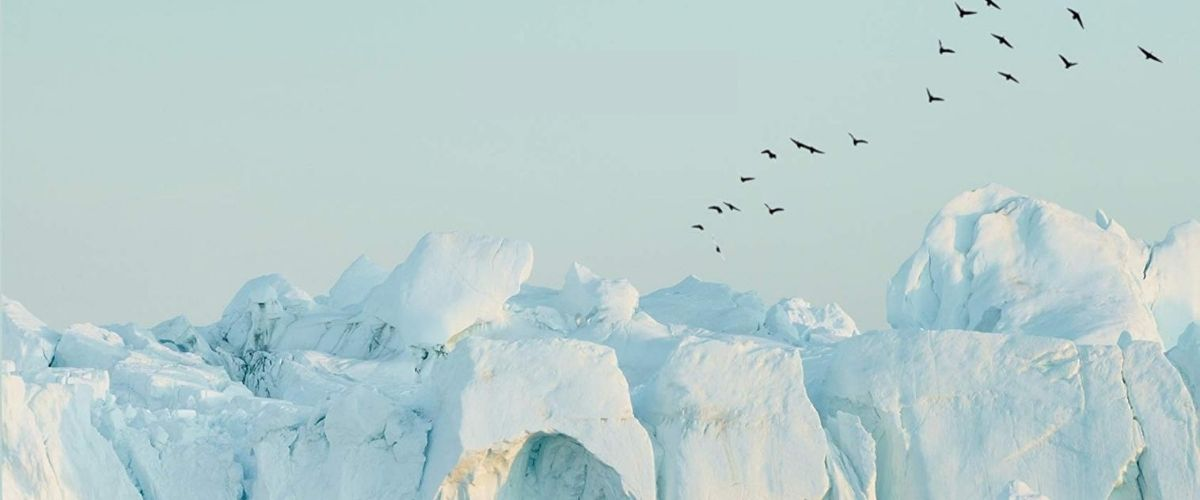 First Look Club: Chris Daniel reviews Migrations